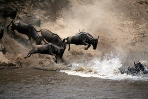 wildbeest river crossing (1).jpg